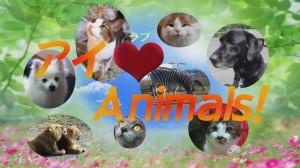 アイ(ラブ)Animals!