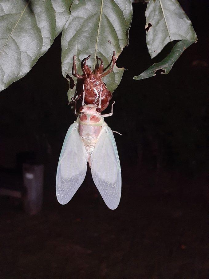 夏の思い出は昆虫と共に!!